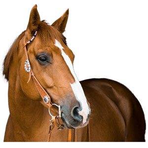 Boutique protection-cheval